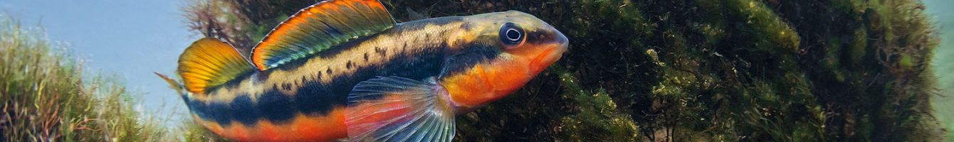 Little Tennessee Native Fish Conservation Area